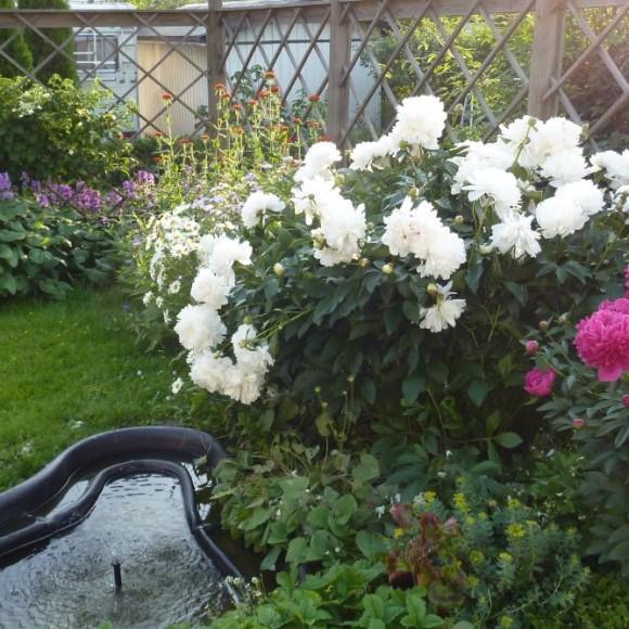 Matleenas perennaträdgård