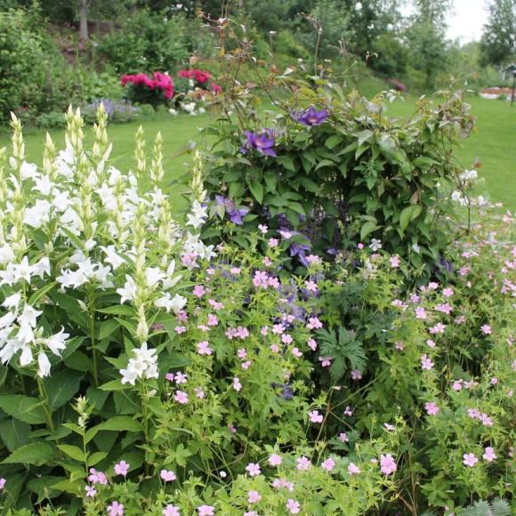 Kirsis perennaträdgård
