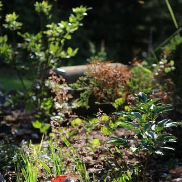 Anus trädgård