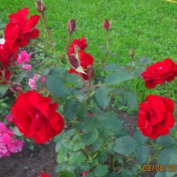 Vuokko Niemelän puutarha