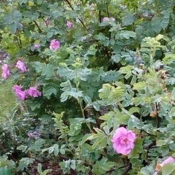 Kaijan puutarha