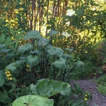 Cottage garden-tunnelmaa rivitalopuutarhassa