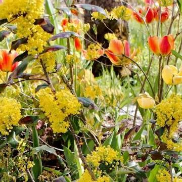 Timolavin kasvikokoelma