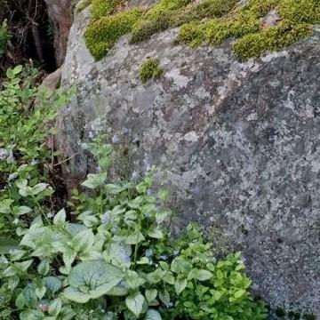 Kiviniemen lammella