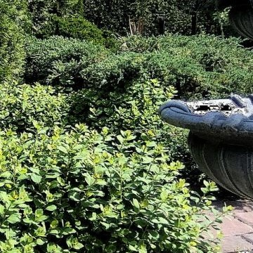 Salainen puutarha Kesäkahvila