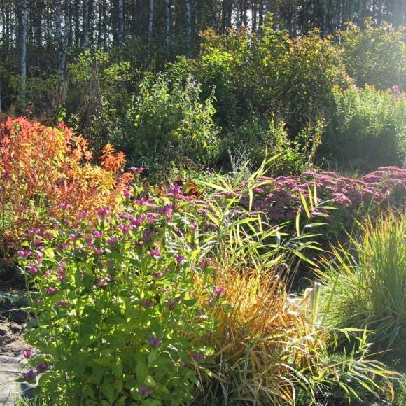 Pölkin puutarha