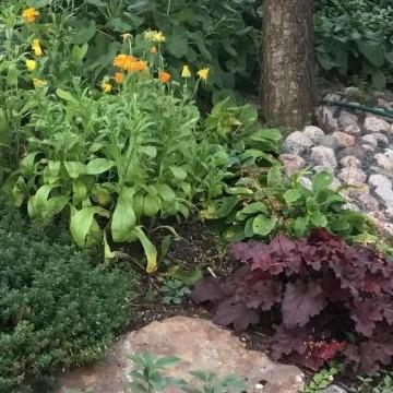 Kivirannan puutarha