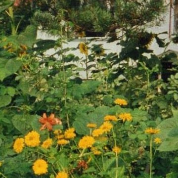 Jussis trädgård
