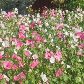 Puhuvat kukat