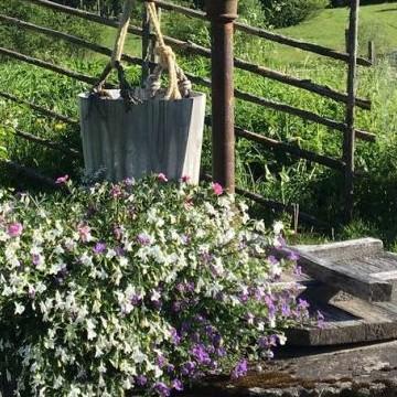 Anjan puutarha