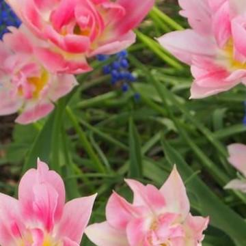 Anne Jokinens trädgård