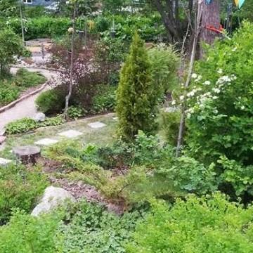 Koivurinteen puutarha
