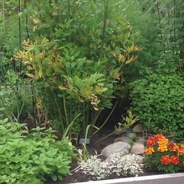 Marian ja Gustavin puutarha