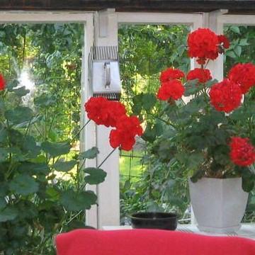 Heidin puutarha