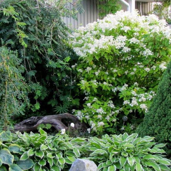 Vuohipukin puutarha