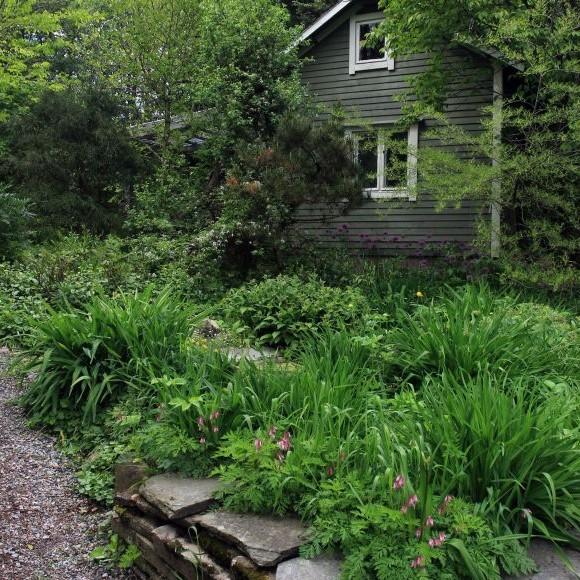 Purorinteen puutarha