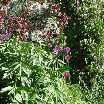 Paulas lilla trädgård
