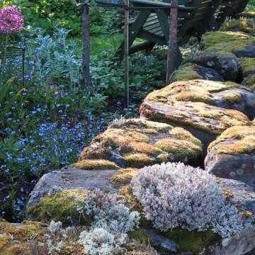 Vilda skogsträdgården