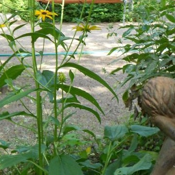 Tystnadens trädgård i Vivamo