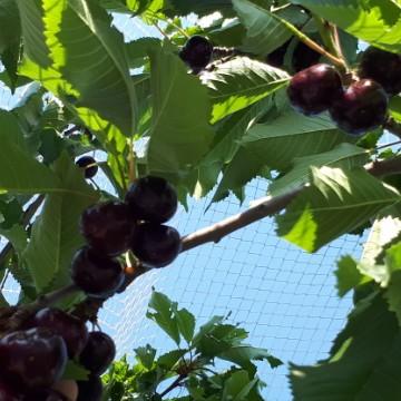 Paratiisin hedelmien tarha
