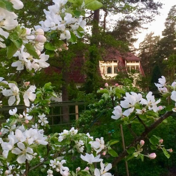 Louhirannan puutarha