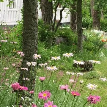 Hunajakodon puutarha
