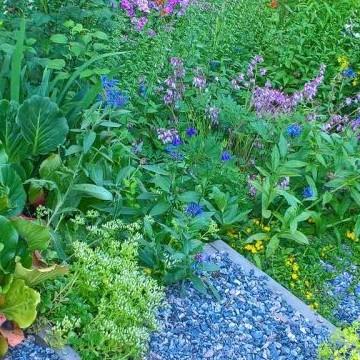Eilan ja Ahtin puutarha