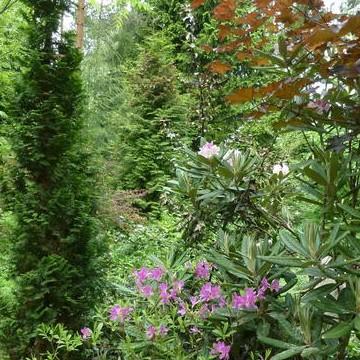 Viherpeippos trädgård