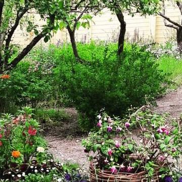 Fredrika Runebergs trädgård