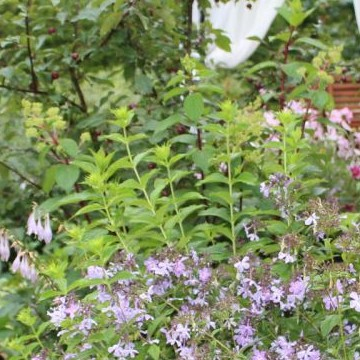 Siirin puutarha