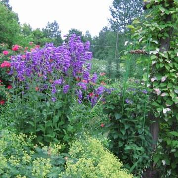 Maijan ja Taiston puutarha