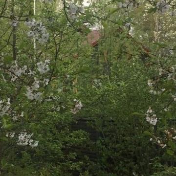 Hepolan salainen puutarha