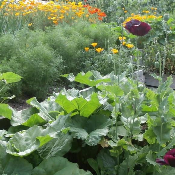 Hanneles trädgård