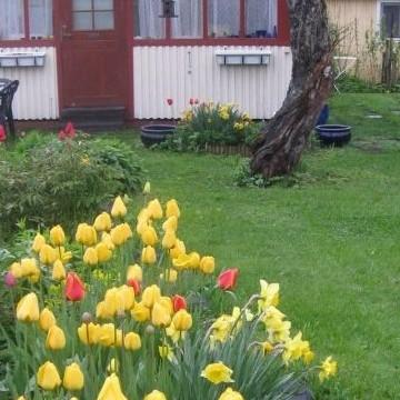 Hertonäs Koloniträdgård