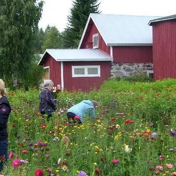 Karjalanruusu M. Halosen kukkapelto