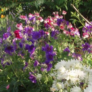 Inge-May Jousmaan puutarha