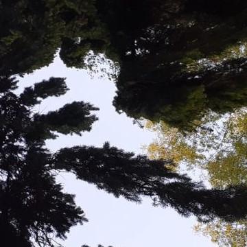 Alapihan arboretum