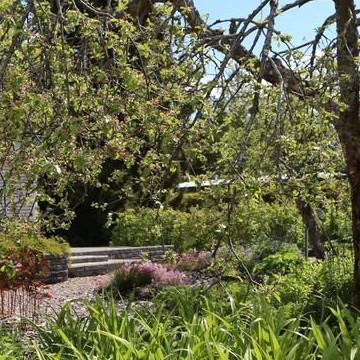 "Satu Tietaris ""njut av sommaren"" -trädgården utan gräsmatta"