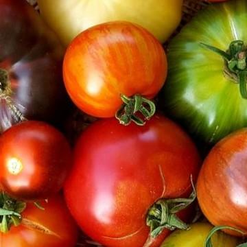 Ritvan tomaattitarha, Turku