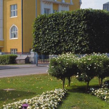 Engelplatsen och Juhani Ahos parken