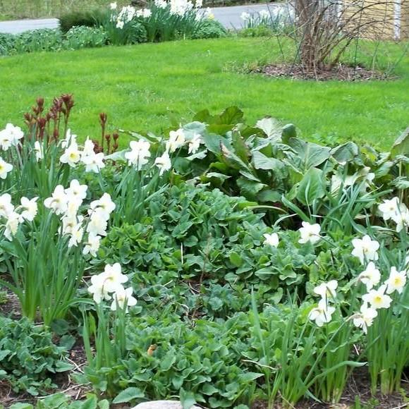 Aamukasteen puutarha