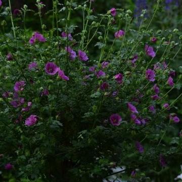 Eevan puutarha