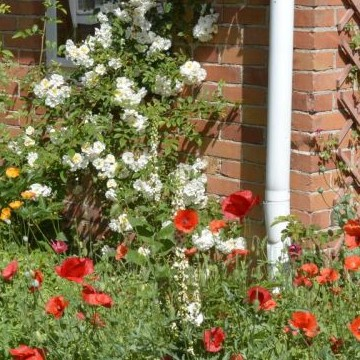 Kotikummun puutarha