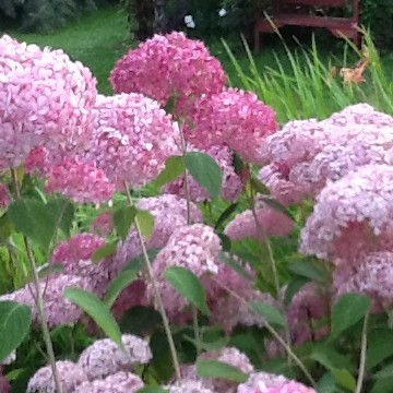 Värien puutarha