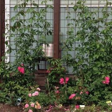 Satus trädgård