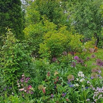 Marjan puutarha ja kahvila