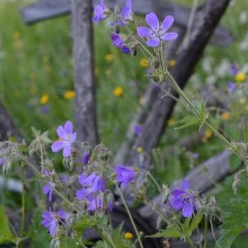 Kirstinkammarin puutarha