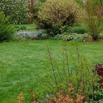 Knippares trädgård
