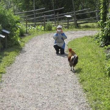 Elonkierto, maaseutu- ja kotieläinpuisto