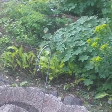 Honkamajas skogsträdgård